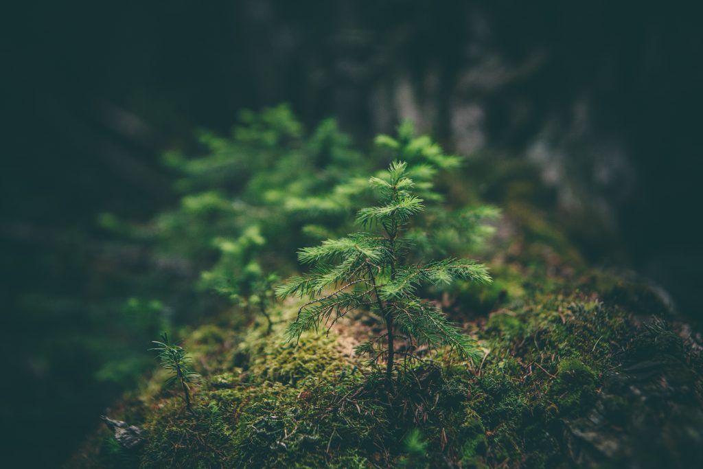 easy green hosting progetto piantumazione spiritus mundi