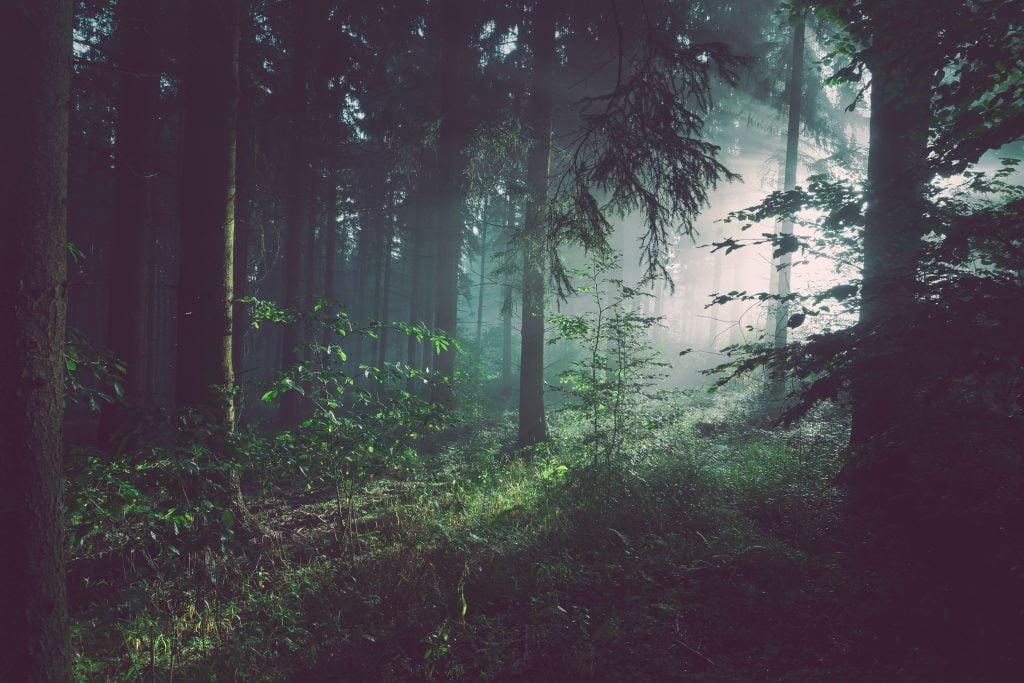 certificato albero easy green hosting ecologico